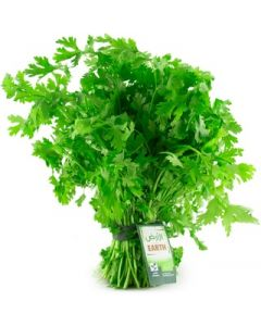 Earth - Cilantro (Coriander) Bunch, 100g