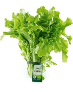 Earth - Oakleaf Lettuce