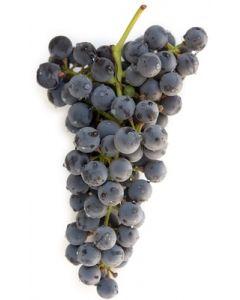 Grapes, Black Autumn seedless