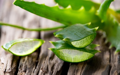 Aloe Vera – the wonder plant from Africa