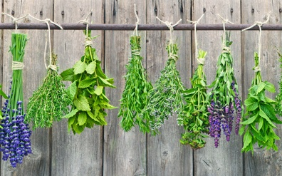 Four Healing Herbs & Spices