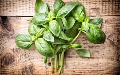 Health Benefits of Fresh Basil