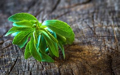 Health Benefits of Fresh Stevia