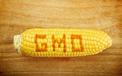 Just how bad is GMO corn for you?